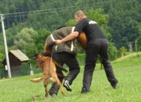 Rekvalifikace pro ostrahy se psy Přerov
