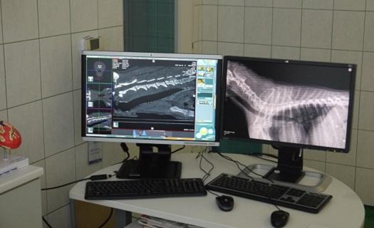 CT vyšetření psa, kočky