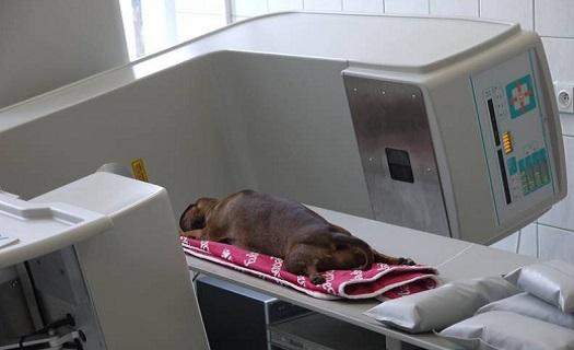 CT vyšetření psa, kočky - počítačová tomografie, operace