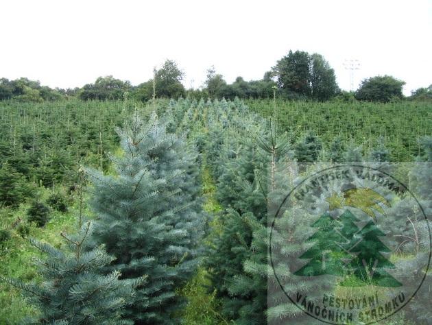 Vánoční stromky prodej Sušice
