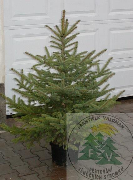 Prodej stromků na Vánoce Sušice