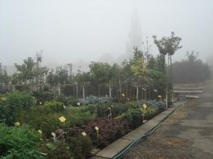 Prodej ovocných stromků, meruňky, švestky, třešně, jabloně, netradiční druhy