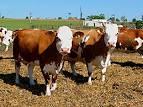 pěstování zemědělských produktů Valtice