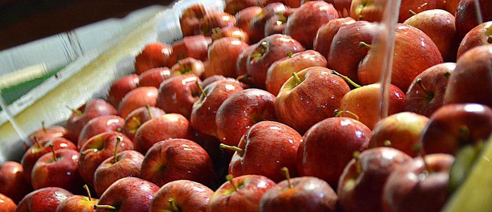 Kvalitní ovoce pro český trh, prodej sezónního ovoce | Znojmo