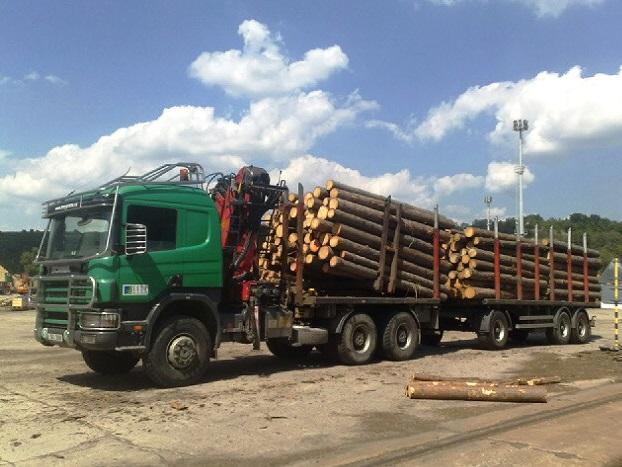 Prodej dřeva od zkušených lesáků (Praha)