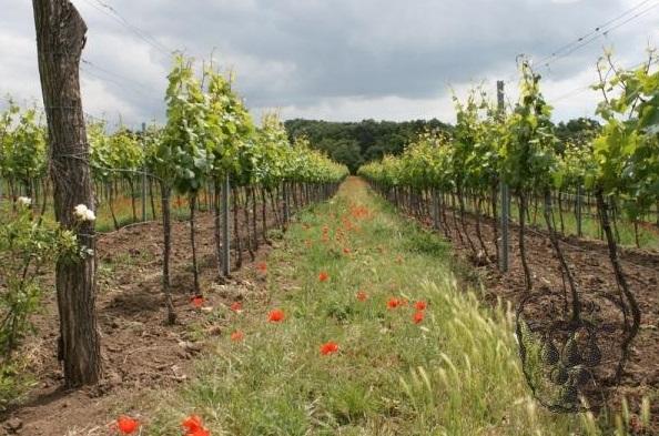 vinařství a vinné sklepy Valtice