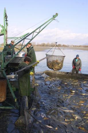 prodej živých ryb Hulín, Kroměříž