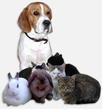 Veterinární služby pro malá a velká zvířata