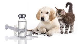 Očkování zvířat- Veterina Baudyš