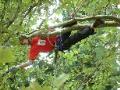 Rizikové kácení stromů stromolezeckou technikou Praha