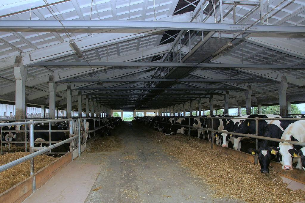 Zemědělský podnik, rostlinná výroba, produkce mléka Přerov, Morava