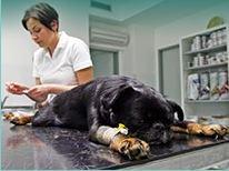 Veterinární klinika, ambulance, veterinář - komplexní veterinární péče