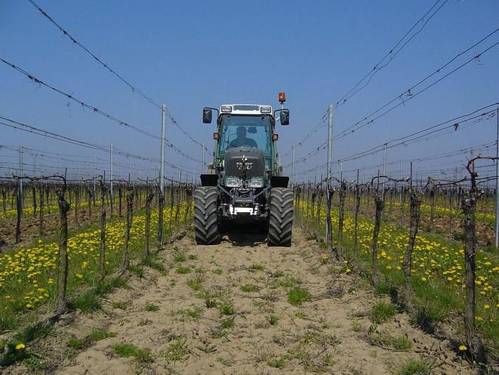 Naše vinice se nacházejí na Slovácku