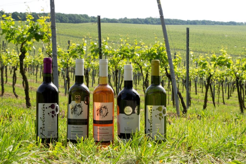 Dárková vína v prodeji - víno jako dárek, balení dárkových vín