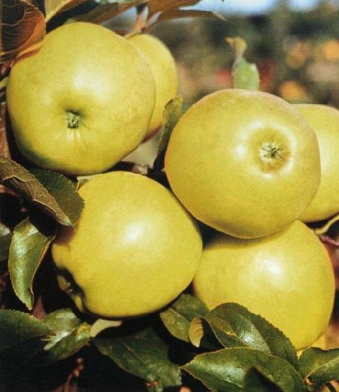 Okrasné i ovocné stromky pro vaši zahradu - Kolín