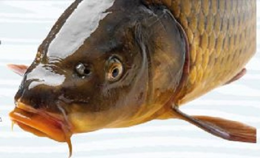 směsi pro sportovní rybolov
