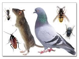 Deratizace, dezinfekce, desinfekce