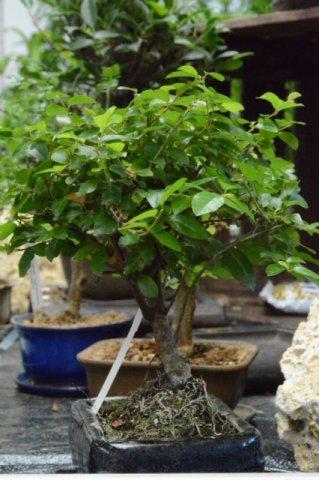 prodej rostlin Brno