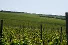Prodej kvalitních přívlastkových vín jižní Morava