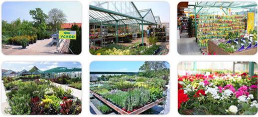 Zahradnictví s prodejem květin a okrasných dřevin - Pardubice