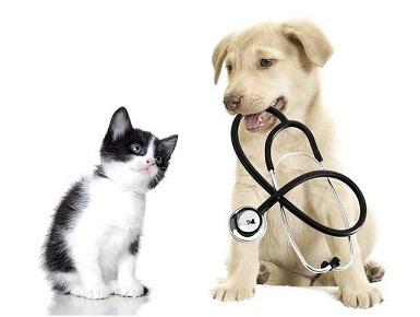 Zvěrolékař, očkování psů a koček, veterinární ordinace s přátelským a pozitivním přístupem