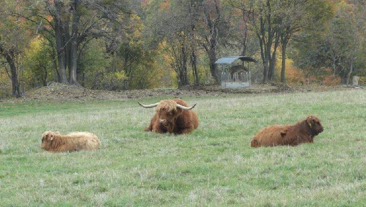 Prodej jehněčího, skopového masa, biomaso-vlastní chov, ekojatka