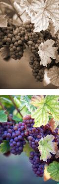 Degustace vín Tvrdonice, jižní Morava