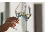 řízená degustace ve vinařství jižní Morava