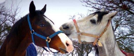 Příměstské tábory Zlín 2015 - letní tábor u koní