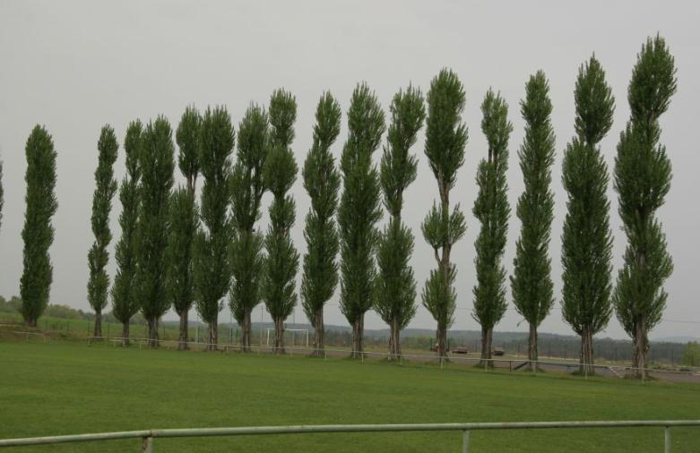 Výsadba stromů a údržba nových stromořadí - Praha - západ - návrh technologie i realizace přesazení