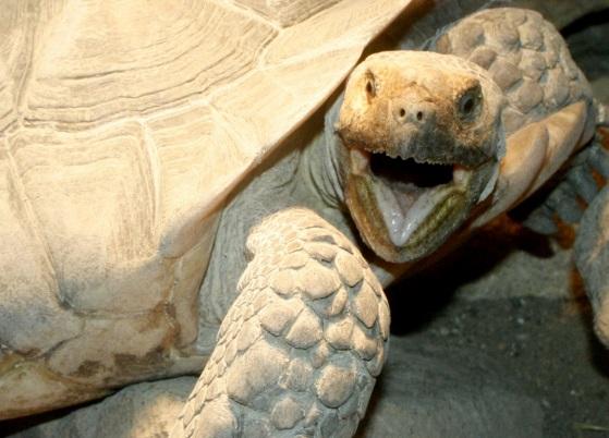 Želvy si také můžete prohlédnout u nás v zoo