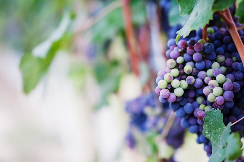 Vinařské potřeby Uherské Hradiště, Boršice-vinné kvasinky, enzymy eshop, prodej
