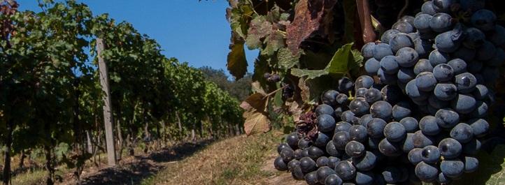 Kvalitní vína z Moravy přivezeme domů i do vaší restaurace