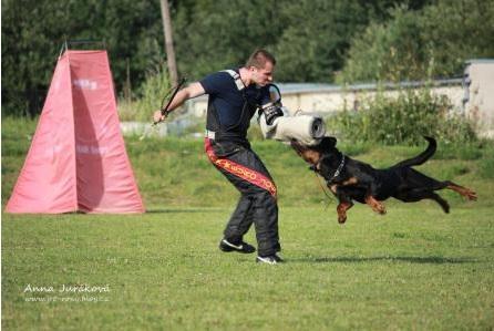 rekvalifikační kurzy v oboru psovod