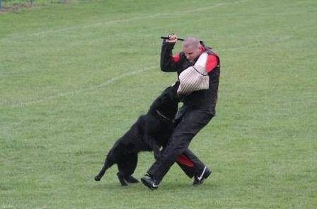 výcvik psovodů