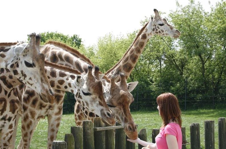 Zážitkové programy ZOO Ústí nad Labem nabízí nejen krmení zvířat