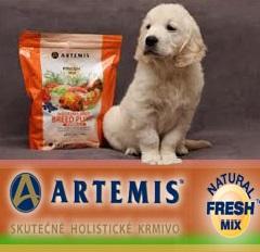 Holistické krmivo pro psy