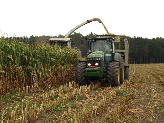 Prodej kukuřice
