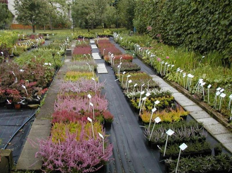 Zahradní centrum - velký výběr, ovocné keře, okrasné stromy