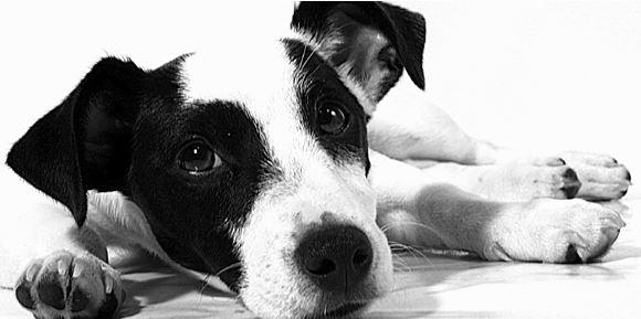 Fyzioterapie a rehabilitace (RHB) pro psy Plzeň - alternativní způsob léčby
