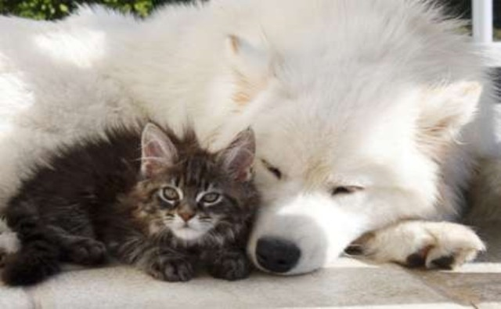 Prevence psů a koček - očkování, odčervení, odblešení, odklíštění a aplikace mikročipu
