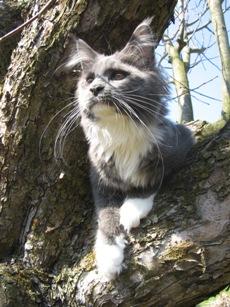 kastrace kočky Ostrava