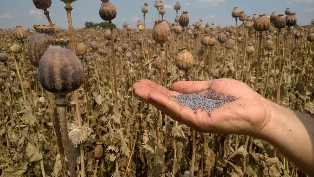 Rostlinné a živočišné výrobky - pěstování obilovin, řepky olejné, cukrovky, chov krav