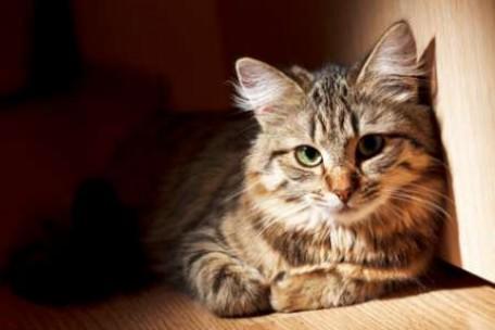 Kastrace koček Opava
