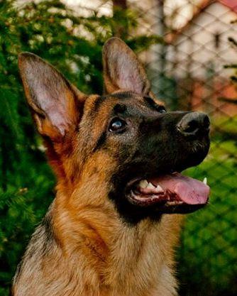 Odstranění zubního kamene ultrazvukem u psa, u koček Ostrava