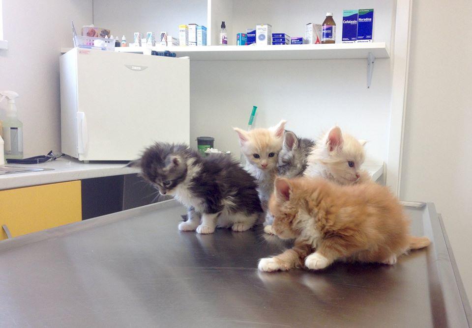 Oddělená ordinace pro kočky, koťata