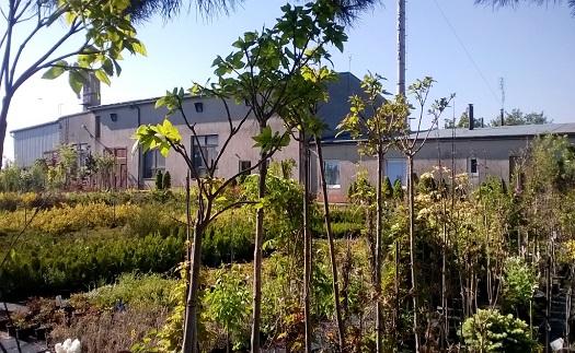 Zahradnictví s velkým výběrem květin, stromků i keřů Opava