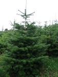 Vánoční stromky a balící sítě  Hrádek, okres Klatovy