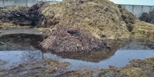 odvoz, likvidace bioodpadu
