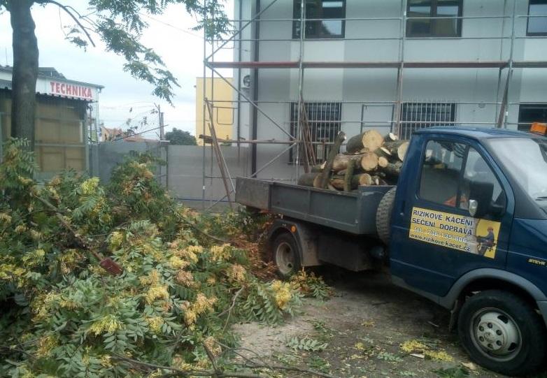 Rizikové kácení stromů včetně odklizení dřeva